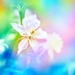 Floral background with colorful flowers.