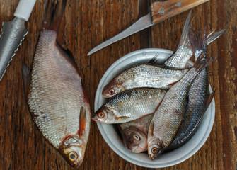 Freshly caught river fish. Selective focus