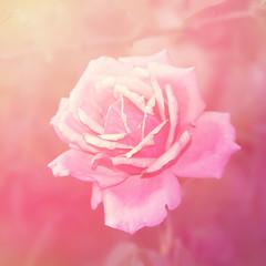 Rose floral background.