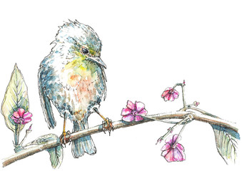 Bird sitting on a tree in watercolor