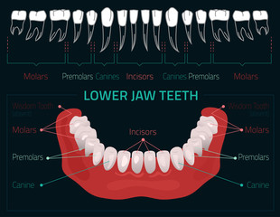 Teeth vector infographic