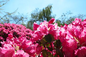 Die Blumen blühen!