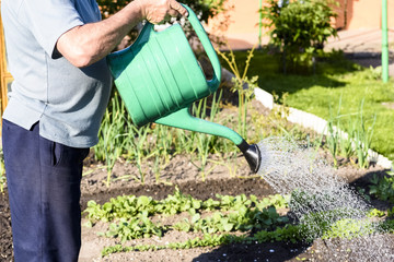 watering plants - taking care of the garden