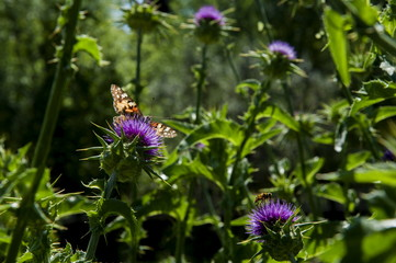 brown butterfly,nature