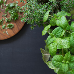 Potted lemon balm and thyme. Selective focus.