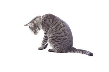 Cat looking down.