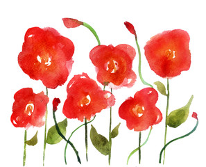 watercolor sketch: poppy on a white background