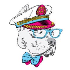 Pitbull in the captain's cap. Funny dog. Vector illustration.