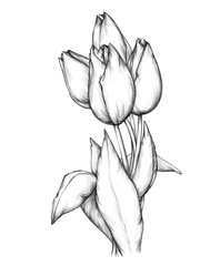 Ein Bund Tulpen