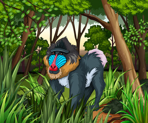 Baboon living in the dark forest