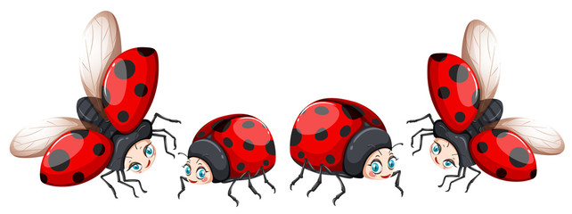 Ladybugs in four poses