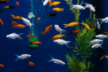 small exotic fish in the aquarium