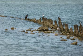 Birds on the coast of the Sea of Azov