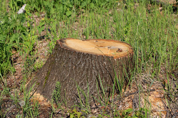 Wooden stump on meadow