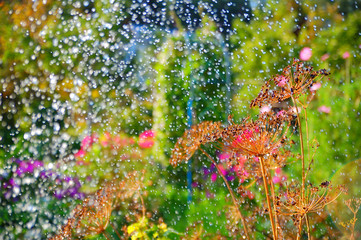 Watering from the sprinkler in the summer garden/View of the blooming garden through the splashes of water during watering