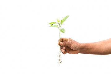 Concept successful hand holding new life plant isolated