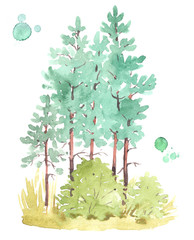 Watercolor painting of young pine-tree forest, isolated on white background.