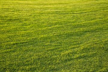 Sunny soccer grass field background.
