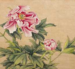 peony painted in Chinese style