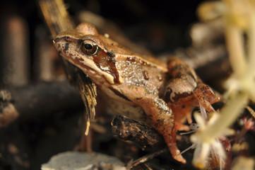 Лягушка крупным планом в траве
