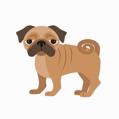 Flat pug pet illustration.