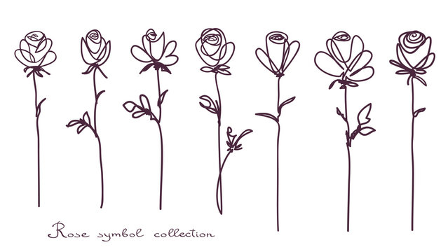 Roses. Collection of isolated rose flower sketch on white background