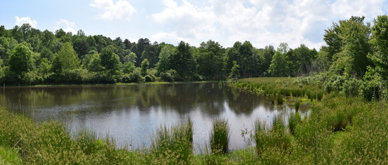 Pond and wetlands in Mississippi