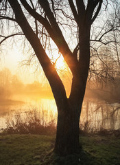 Sun rays break through the tree