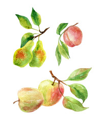 Apple, pear and peach branches with leaves and fruits in watercolor