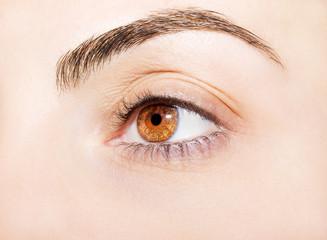 an insightful look on a brown eye