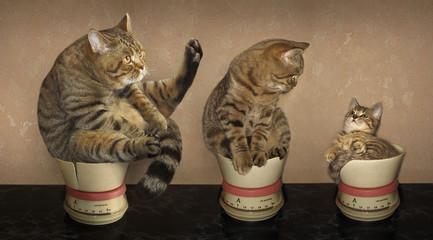 Cat family.