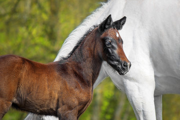 Little foal and his mother