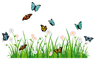 Colorful summer meadow and butterflies - Bunte Sommerwiese und Schmetterlinge