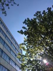 Baum vor bürogebäude