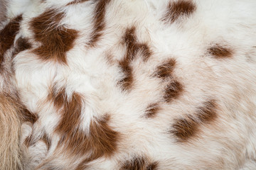 White horse fur texture for background