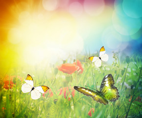 Butterfly and summer meadow