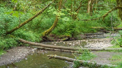 Creek in the beautiful forest. COAL CREEK PARK, KING COUNTY, WASHINGTON STATE