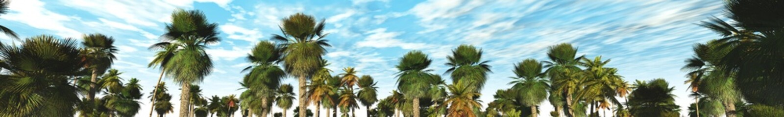 palm grove, panorama, 3D rendering. Palm trees against the blue sky with clouds.