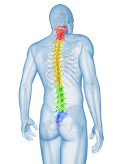 Human spine, Illustration