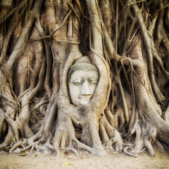 Buddha head in the tree roots at Wat Mahathat temple ruins in Ayutthaya, Thailand.