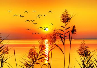 puesta de sol sobre el mar dorado