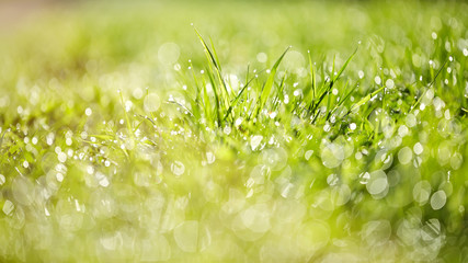Abstract Grass background with bokeh