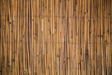 фон камыш бамбук, background bamboo cane