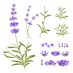 Lavender flowers vector elements. Illustration constructor for greeting cards and invitations