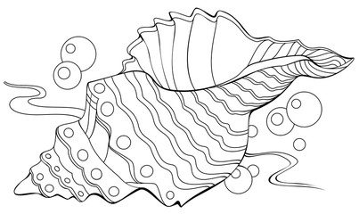Black and white illustration of shell for coloring. Developing children skills for drawing. Vector image.