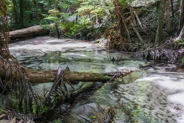 rainforest fraser island - australia