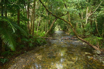 Landscape of a wild stream in Daintree National Park Queensland