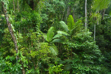 Aerial landscape view of Daintree National Park Queensland Austr