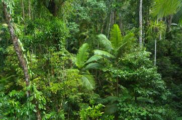 Aerial landscape view of Daintree National Park Queensland Austr