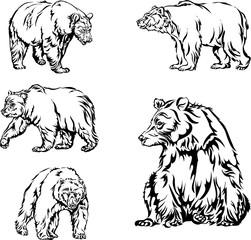 bear, image, various poses, drawing